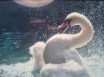 avatar_ptica54