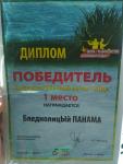 avatar_ПАНАМА