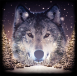 avatar_КАА61