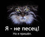 avatar_Sox