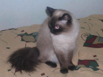 avatar_SIMA