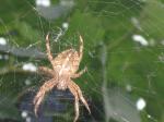 avatar_паук