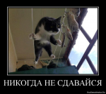 avatar_tit1974