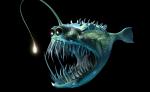 avatar_DonSpenser