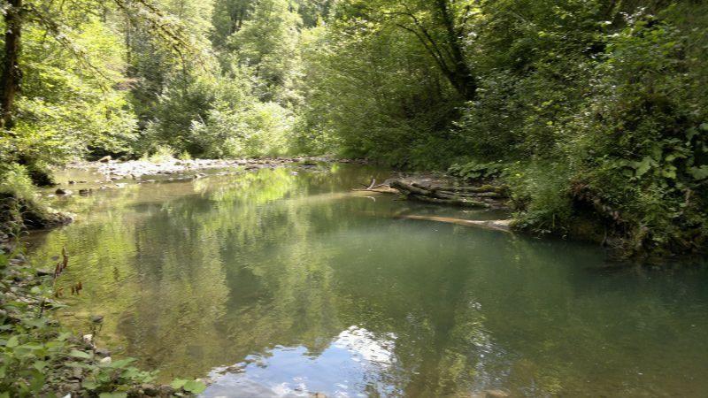 Река мзымта в адлере рыбалка